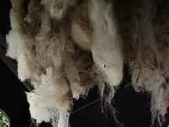 Portscatho_Fleece Drying